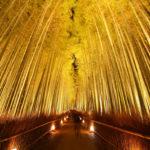 Chikurin-no-michi (Arashiyama Bamboo Grove), Kyoto