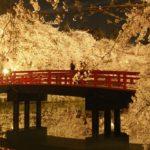 Hirosaki Sakura Matsuri (The Cherry Blossom Festival in Hirosaki), Aomori