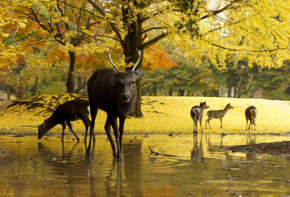 Nara Koen Park, Nara