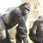 Higashiyama Zoo and Botanical Gardens, Aichi