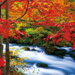 Oirase Keiryu (Mountain Stream in Oirase), Aomori
