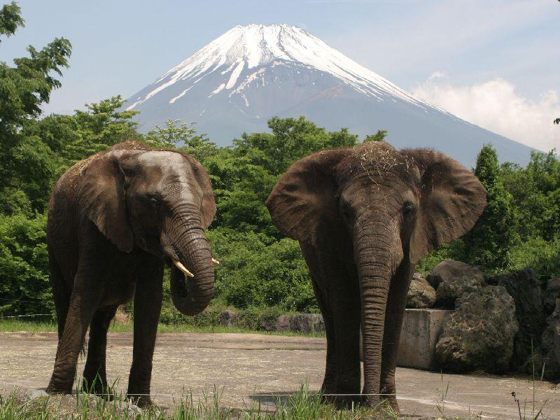 Fuji Safari Park, Shizuoka