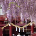 Kasama Inari Jinja Shrine, Ibaraki